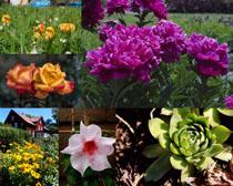 美麗的花朵鮮花拍攝高清圖片
