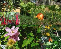 花朵植物綠色拍攝高清圖片
