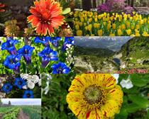 漂亮的鮮花寫真拍攝高清圖片