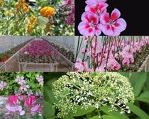 漂亮的養殖花朵拍攝高清圖片