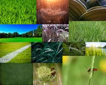 草地植物拍攝高清圖片