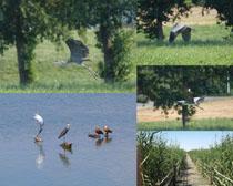 仙鶴飛鳥動物拍攝高清圖片