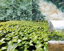 綠色葉子植物拍攝高清圖片