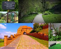 綠色植物風光拍攝高清圖片