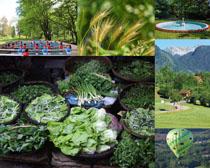 植物蔬菜草地風景拍攝高清圖片