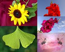 漂亮的花朵攝影高清圖片