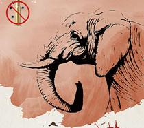 保护动物公益海报PSD素材