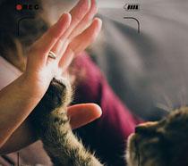 关爱动物公益海报PSD素材