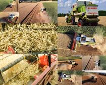 豐收割稻機攝影高清圖片