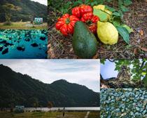 美麗的風景與南瓜攝影高清圖片