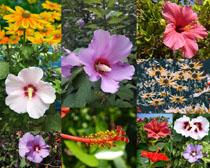 盛開鮮花攝影高清圖片