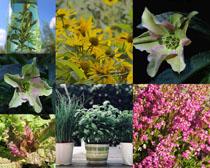 漂亮的植物花朵攝影高清圖片