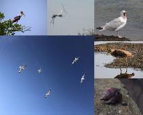 天空海邊飛鳥攝影高清圖片