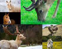 馬鹿動物寫真攝影高清圖片