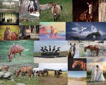 溫順的馬寫真拍攝高清圖片