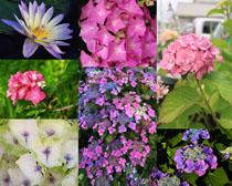 漂亮的色彩鮮花拍攝高清圖片