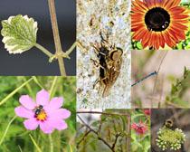 花朵植物與蜜蜂攝影高清圖片