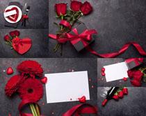玫瑰禮物愛情攝影高清圖片