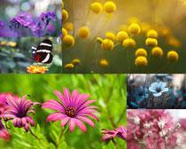春天花朵与蝴蝶摄影高清图片
