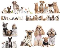 可愛小狗動物寫真拍攝高清圖片