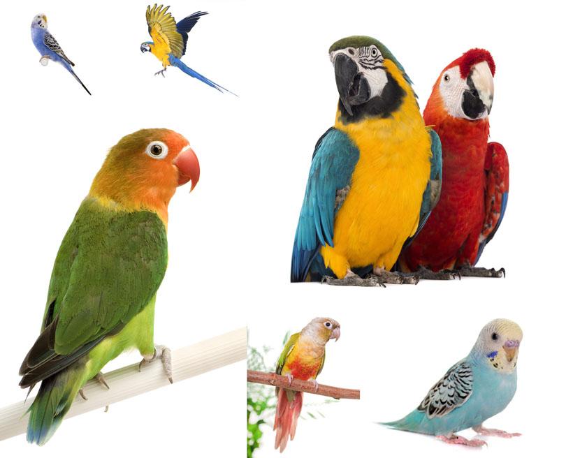 鸚鵡飛鳥動物寫真拍攝高清圖片