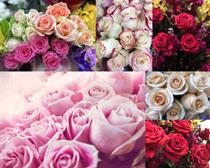 漂亮的色彩玫瑰花朵摄影高清图片