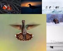 飛鳥企鵝動物與風景PSD素材