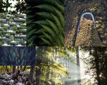 森林植物風景攝影高清圖片