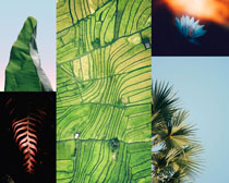 熱帶植物葉子攝影高清圖片