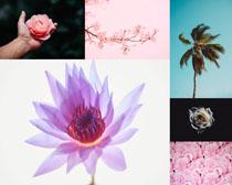 粉色花朵與樹攝影高清圖片