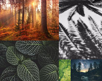 森林樹葉風景拍攝高清圖片