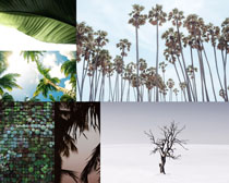 美麗的樹木風景拍攝高清圖片