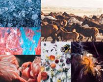 動物與景觀背景拍攝高清圖片