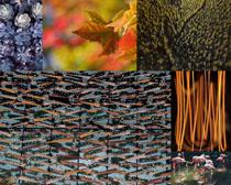 植物樹木風光拍攝高清圖片
