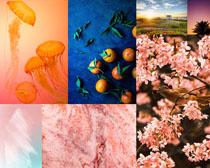 花朵果子風景植物攝影高清圖片