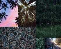 樹林樹木植物拍攝高清圖片