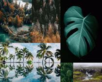 樹木植物景色拍攝高清圖片