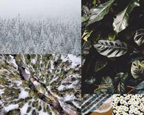 花朵樹葉雪景樹林風景拍攝高清圖片