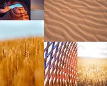 沙漠稻田風景拍攝高清圖片
