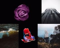 花朵風景建筑拍攝高清圖片