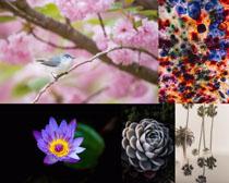 梅花荷花花朵鳥攝影高清圖片