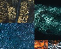 藍色海洋樹林風景拍攝高清圖片
