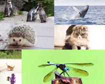 可愛動物刺猬蜻蜓貓咪攝影高清圖片