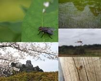 蜻蜓苍蝇蜘蛛动物风景摄影高清图片