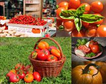 西红柿南瓜辣椒拍摄高清图片