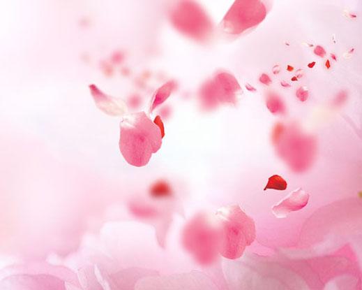 粉色花背景PSD素材