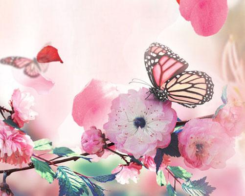 蝴蝶花朵绘画背景摄影高清图片