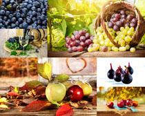 葡萄藍梅蘋果拍攝高清圖片