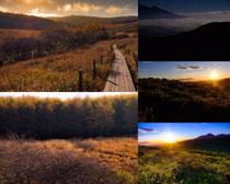 夕陽森林風光拍攝高清圖片