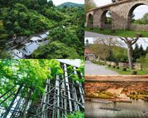 綠樹建筑風光攝影高清圖片